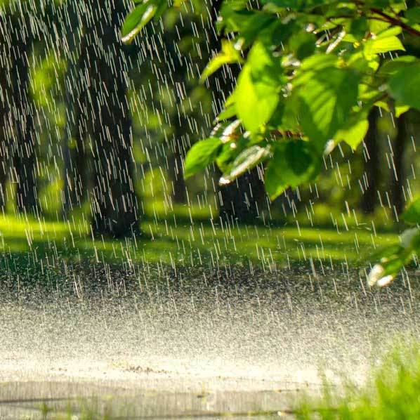 regnbede